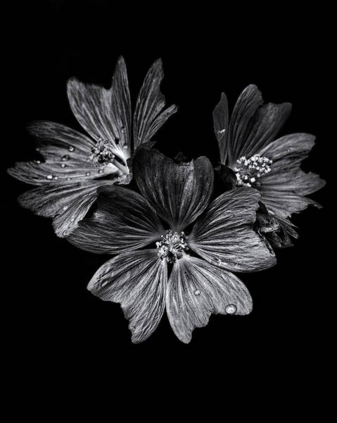 Poster featuring the photograph Backyard Flowers In Black And White 11 After The Storm by Brian Carson