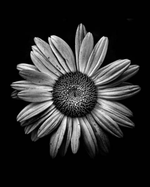 Poster featuring the photograph Backyard Flowers In Black And White 13 by Brian Carson