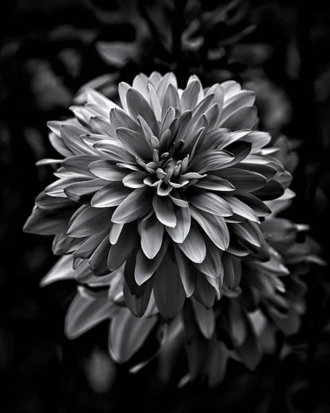 Poster featuring the photograph Backyard Flowers In Black And White 15 by Brian Carson