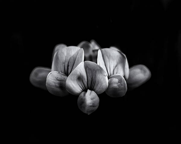 Poster featuring the photograph Backyard Flowers In Black And White 5 by Brian Carson