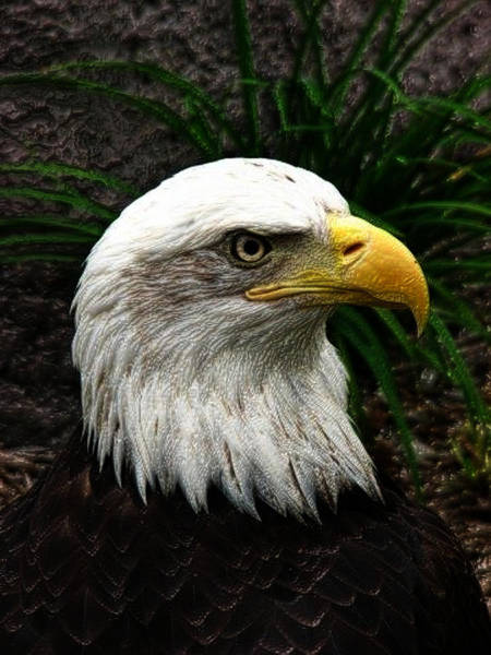 Poster featuring the digital art Bald Eagle by Jeff Iverson