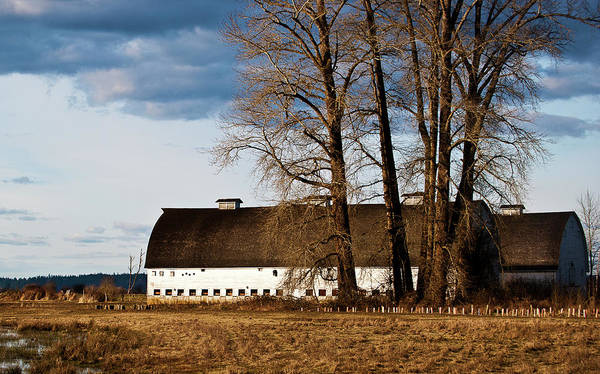 Barn And Trees Poster