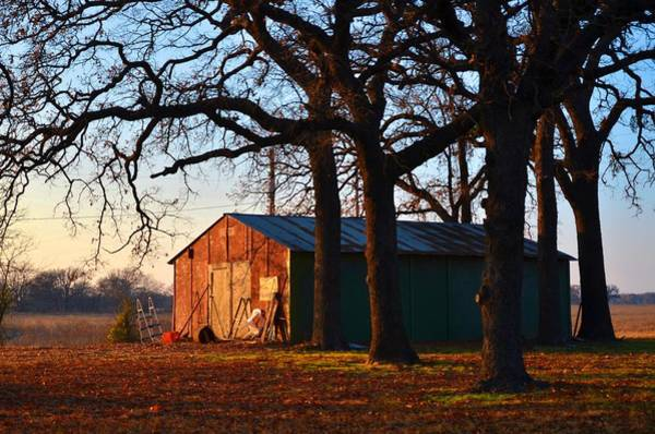 Barn Under Oak Trees Poster