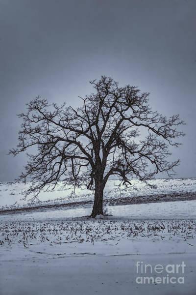 Barren Winter Scene With Tree Poster
