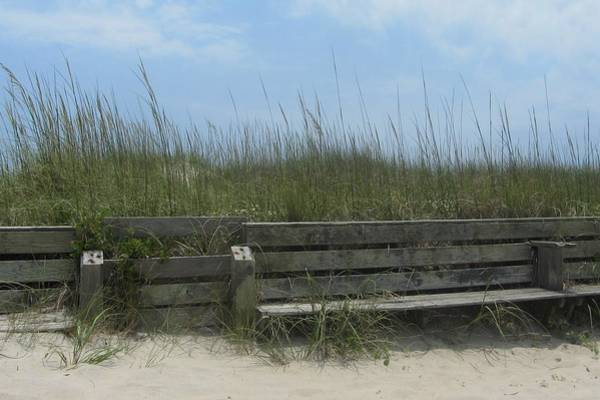 Beach Grass And Bench  Poster
