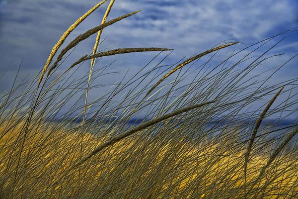 Beach Grass On A Sand Dune At Glen Arbor Michigan Poster