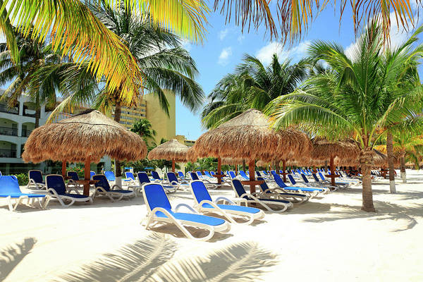 Beach With Palm Trees And Lounge Chairs Poster