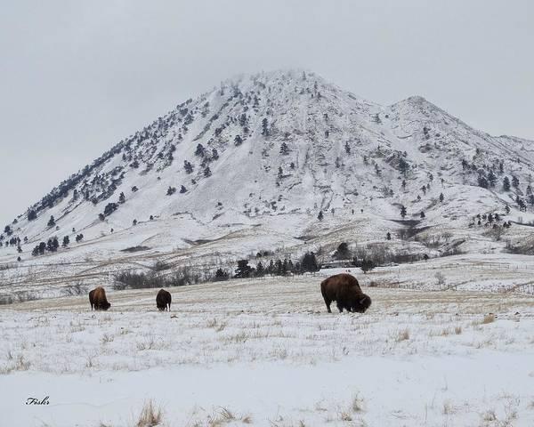 Bear Butte Buffalo Poster