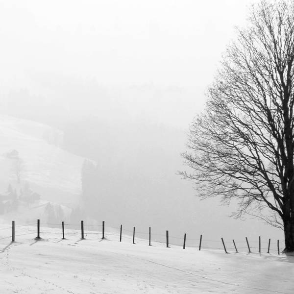 Beautiful Winter Landscape With Tree And Fence Poster