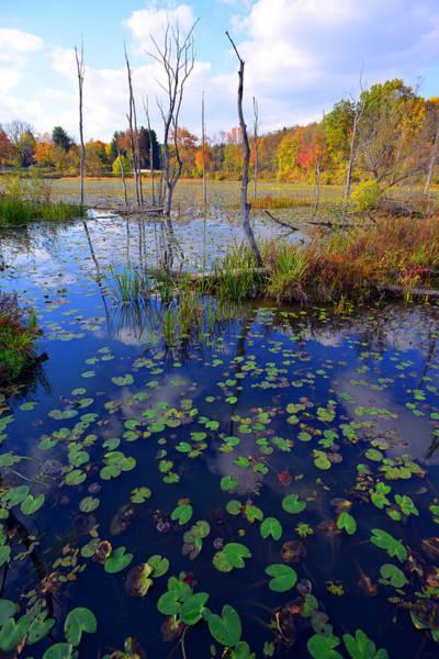 Beaver Marsh In Autumn Poster