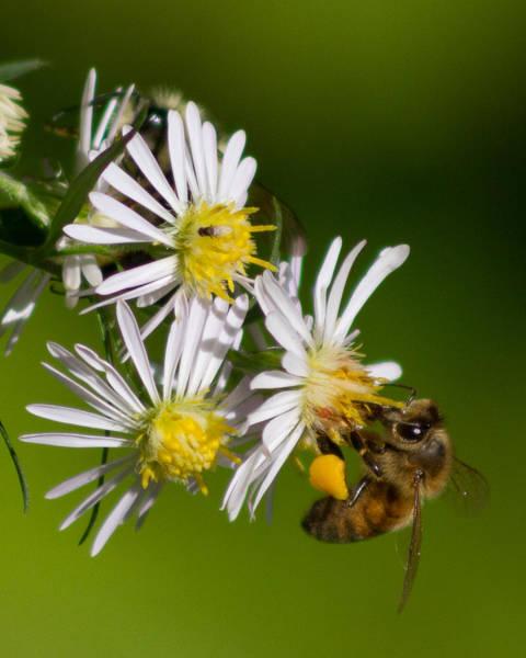Bee Harvest Poster