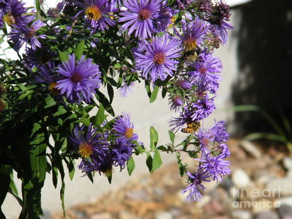 Bee On Purple Poster