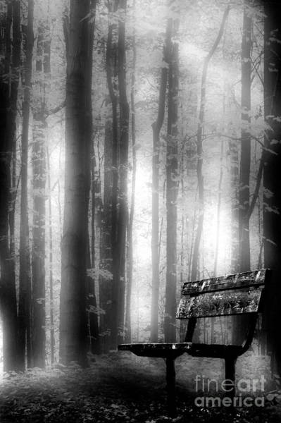 Bench In Michigan Woods Poster