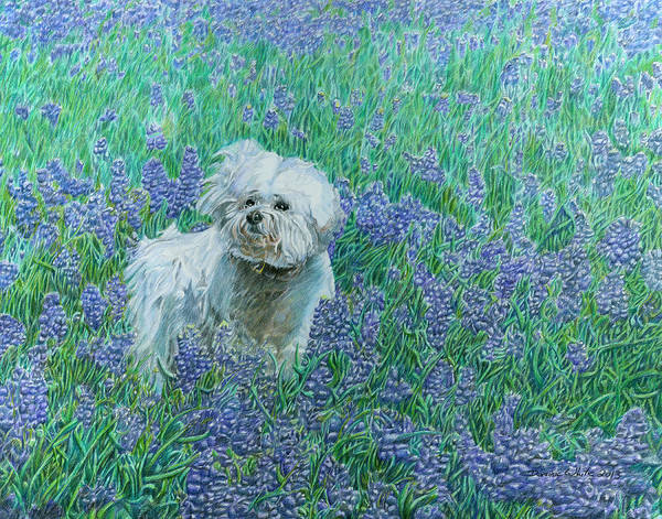 Poster featuring the drawing Bichon In The Bluebonnets by Dominic White