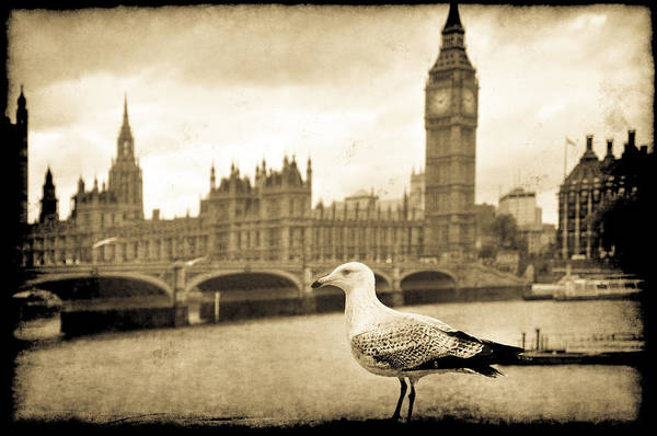 Big Ben And The Seagull Poster
