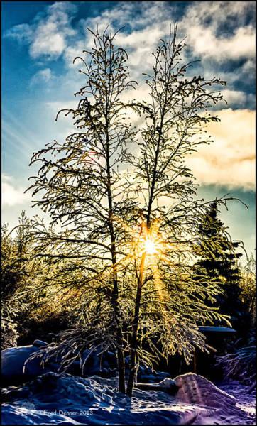 Birch Frost Poster