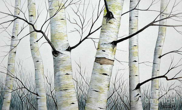Birch Trees In The Forest In Watercolor Poster