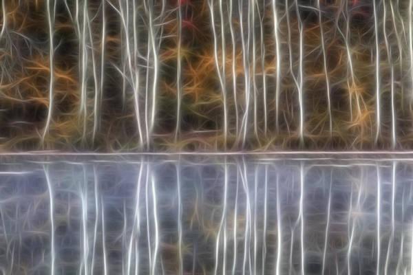 Birch Trees Poster