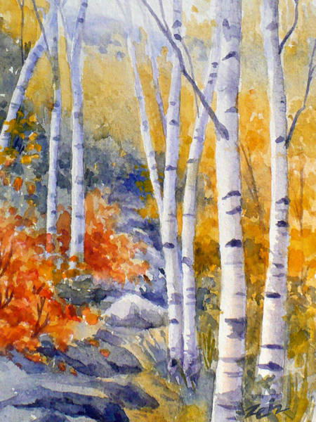 Birches Along The Trail Poster