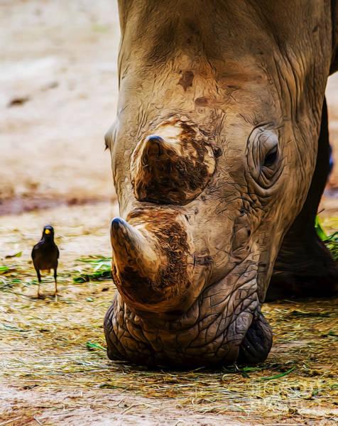 Bird And Rhino Poster