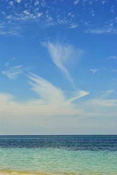 Bird Cloud Poster