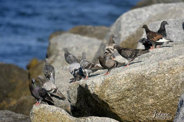 Bird Rock Beach Poster