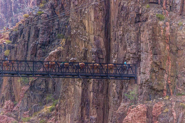 Black Bridge In The Grand Canyon Poster