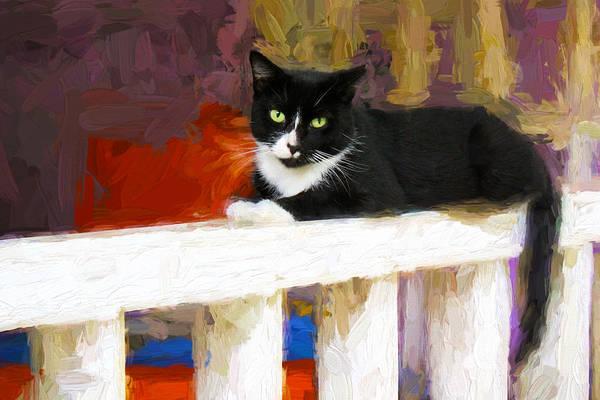 Black Cat In Color Series 2 Poster