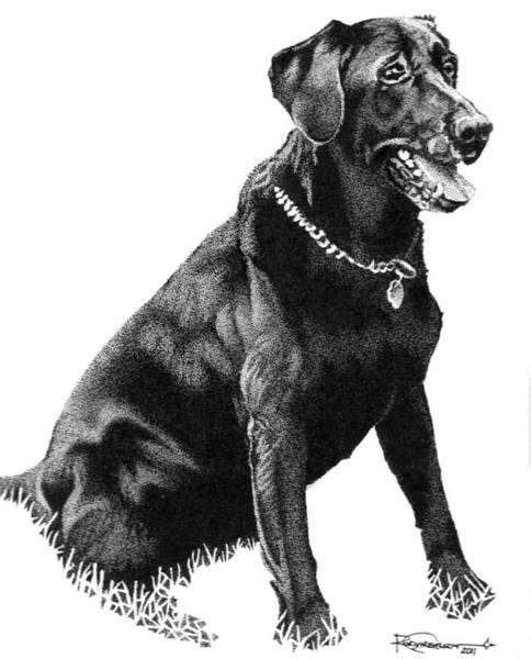 Poster featuring the drawing Black Lab by Rob Christensen