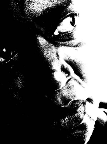 Black Miracle Portrait 12 Poster