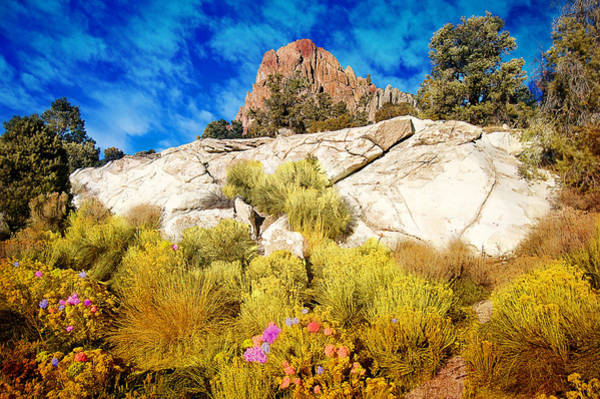 Blooming Nevada Desert Near Ely Poster