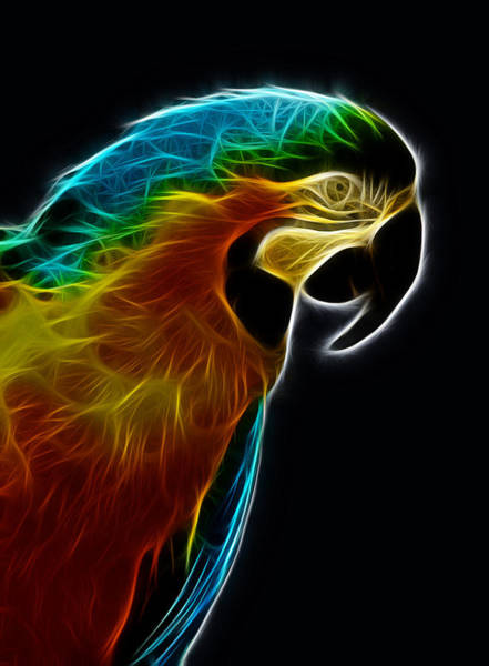 Blue And Gold Macaw Frac Poster