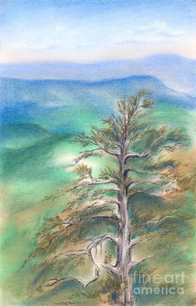 Blue Ridge Pine Poster