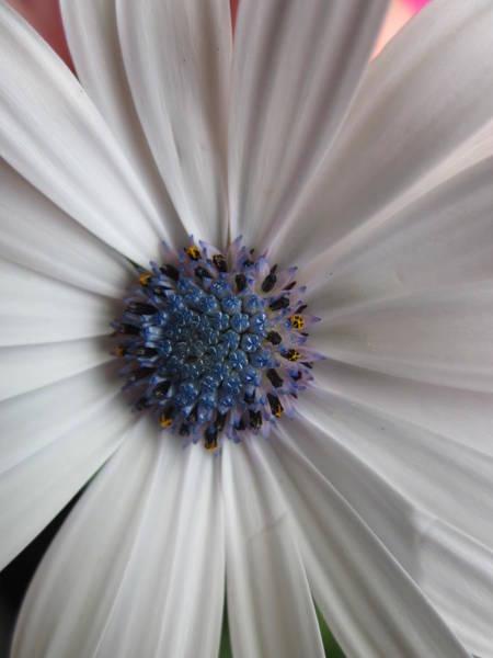 Blue-white Loveliness Poster