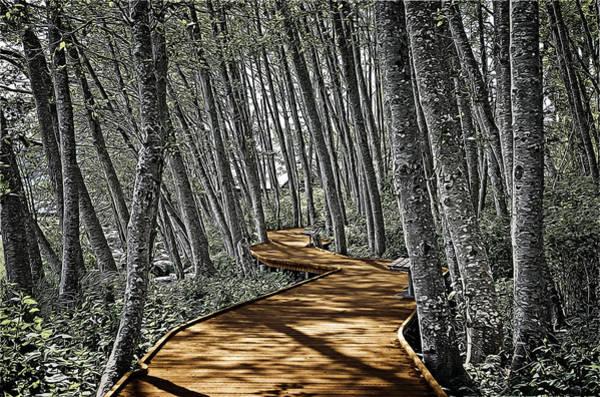 Boardwalk In The Woods Poster