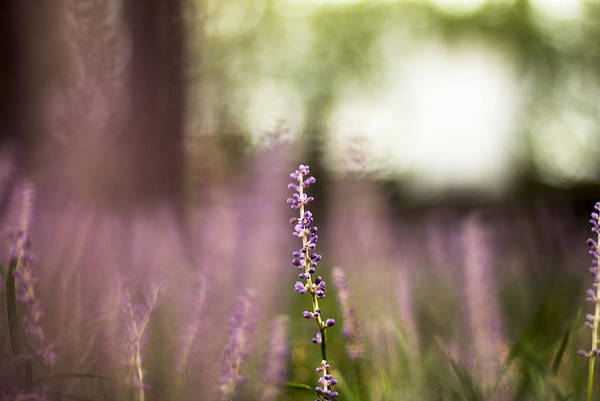 Bokeh With Purple Wildflower Poster