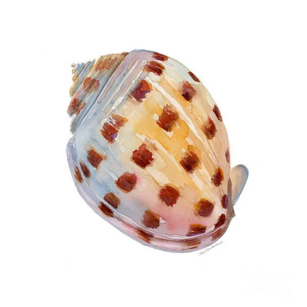 Bonnet Shell Poster