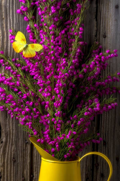 Boronia With Yellow Butterfly Poster