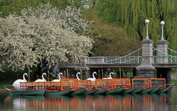 Boston Swan Boats  Poster