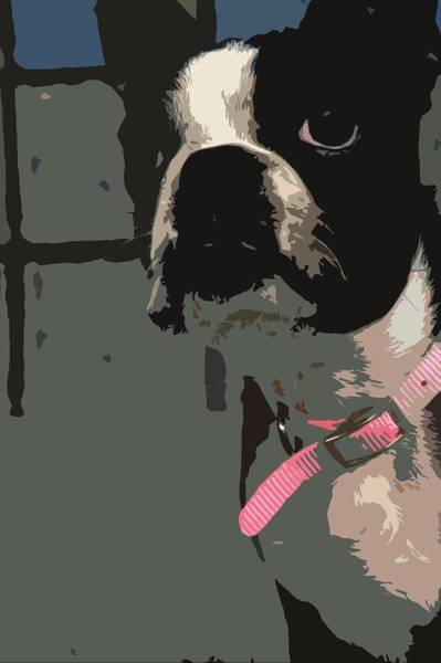Boston Terrier Art01 Poster