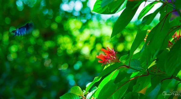 Botanical Garden Butterfly Poster