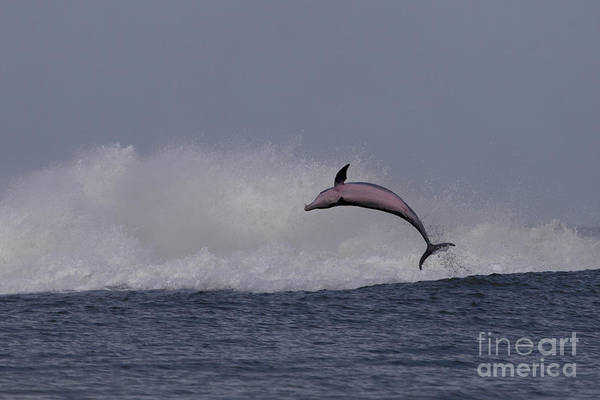 Bottlenose Dolphin Photo Poster