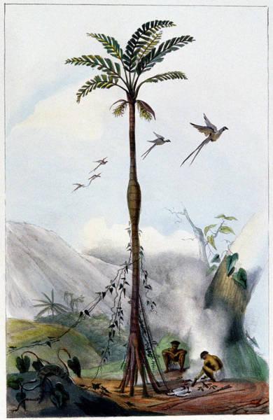 Brazillian Landscape Poster