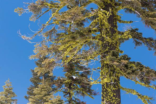 Bright Lichen Poster