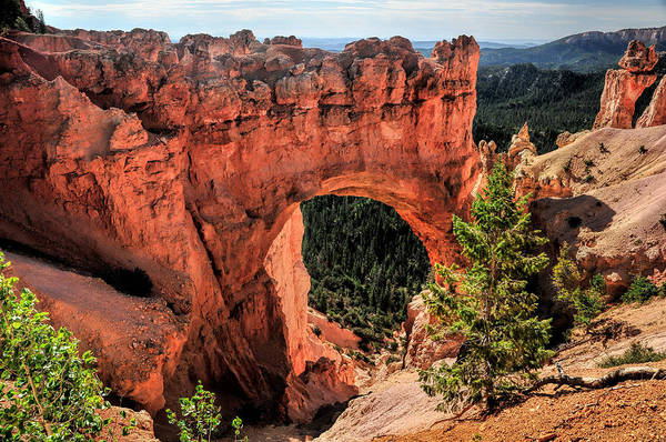 Bryce Canyon Arches Poster