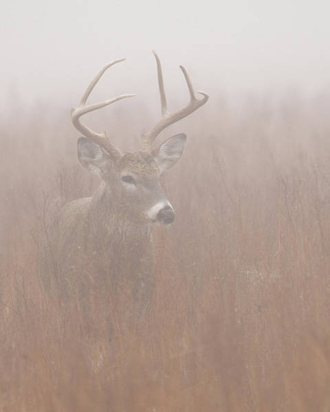 Buck In Fog Poster