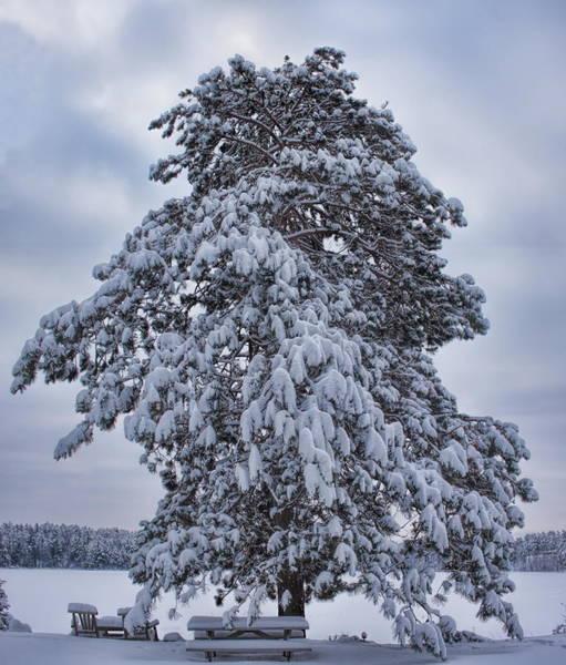 Buck Lake Flocked Pine Poster