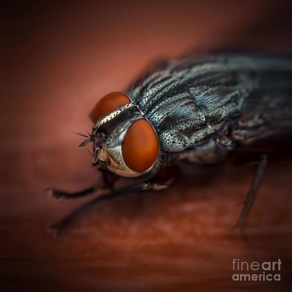 Bug Eyed  Poster