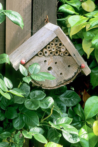 Bug Hotel Poster