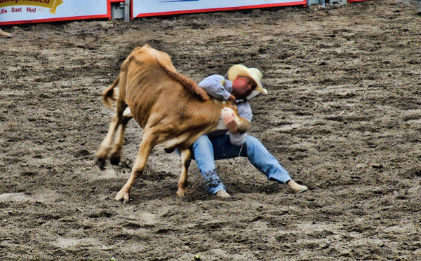 Bull Dogging Poster